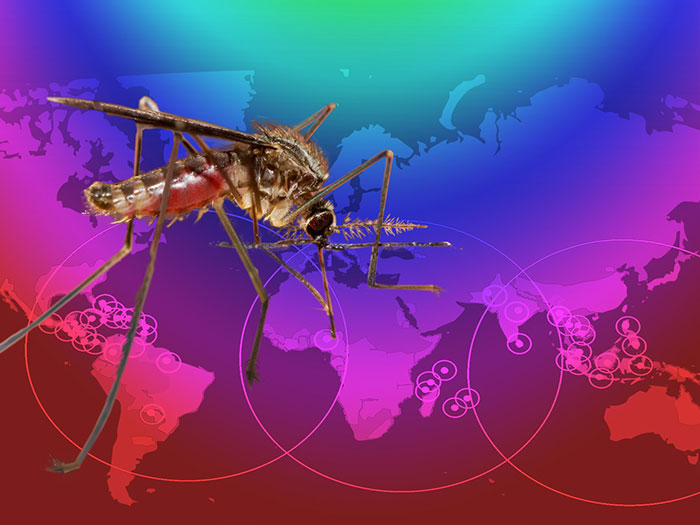 A mosquito on a map representing Zika virus timeline