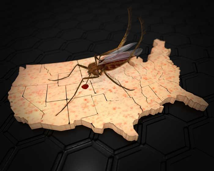 a mosquito sitting on the United States Map