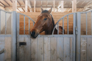 Head of horse looking over the stable doors on the background of other horses in Florida